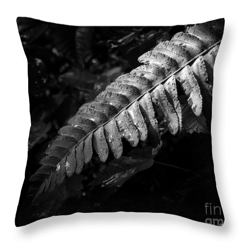 Fern Throw Pillow featuring the photograph Rain Kissed by CK Caldwell