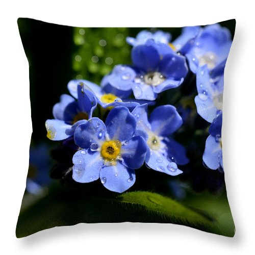 Wood Forget-me-not Throw Pillow featuring the photograph Rain On Forget-me-not by Thomas R Fletcher