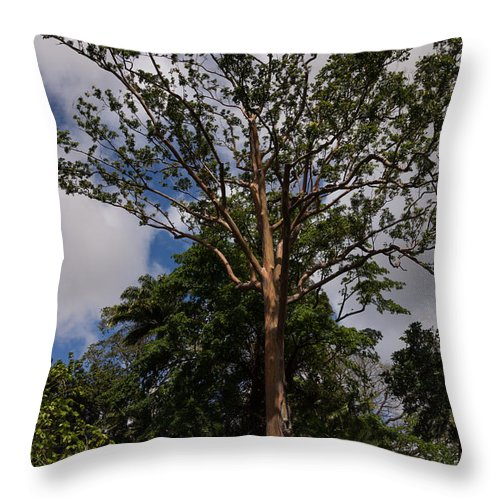 Rainbow Eucalyptus Throw Pillow featuring the photograph Rainbow Eucalyptus - Tall Proud And Beautiful by Georgia Mizuleva