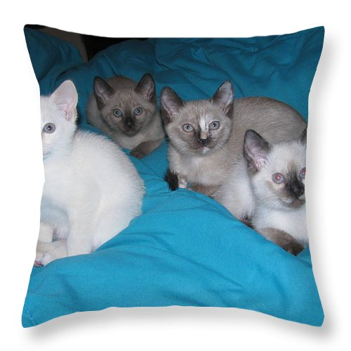 Kittens Throw Pillow featuring the photograph Rainbow Of Kittens by Pamela Benham