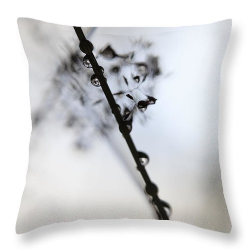 Abstract Throw Pillow featuring the photograph Raindrop Clinging To A Grass Culm by Ulrich Kunst And Bettina Scheidulin