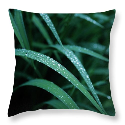 Tranquility Throw Pillow featuring the photograph Raindrop by Seiji Nakai