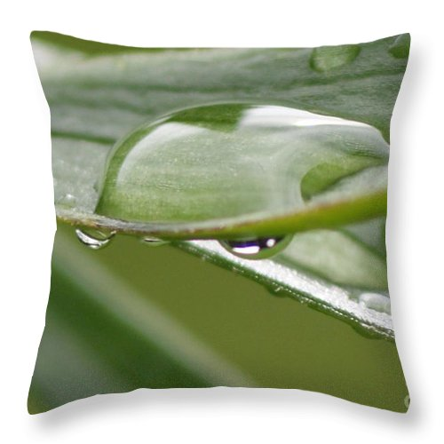 Raindrop Throw Pillow featuring the photograph Raindrops by Carol Lynch
