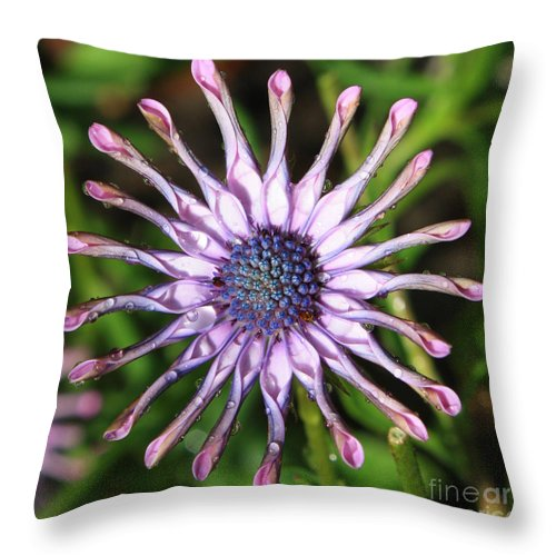 Daisy Throw Pillow featuring the photograph Raindrops On Daisy Square by Carol Groenen