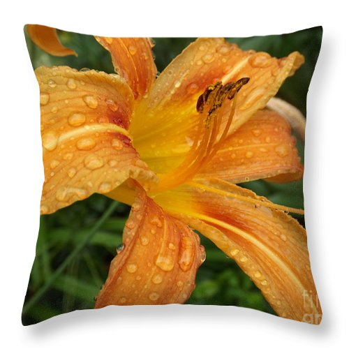 Nature Throw Pillow featuring the photograph Raindrops On Golden Lily by Lingfai Leung