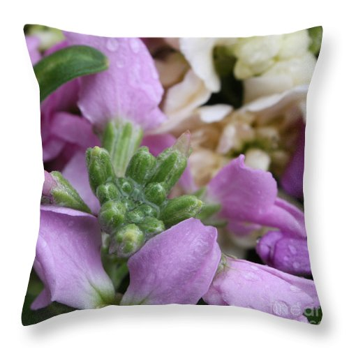 Purple And White Throw Pillow featuring the photograph Raindrops On Purple And White Flowers by Carol Groenen