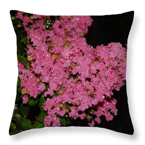 Crepe Myrtle Throw Pillow featuring the photograph Rainy Day Blooms by Suzanne Gaff
