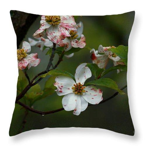 Dogwood Throw Pillow featuring the photograph Rainy Day Dogwood by Douglas Stucky