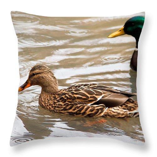 Dan Sabin Throw Pillow featuring the photograph Rainy Day Mallard Hen by Dan Sabin