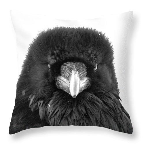 Raven Throw Pillow featuring the photograph Raven by Scott Moss