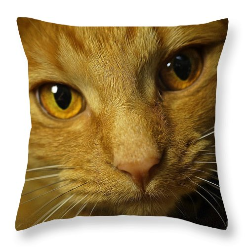 Orange Cat Throw Pillow featuring the photograph Raya by The Noeto