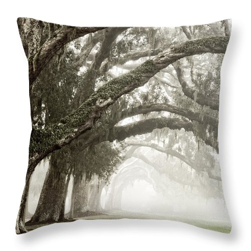 Trees Throw Pillow featuring the photograph Reaching Branches by Barbara Northrup
