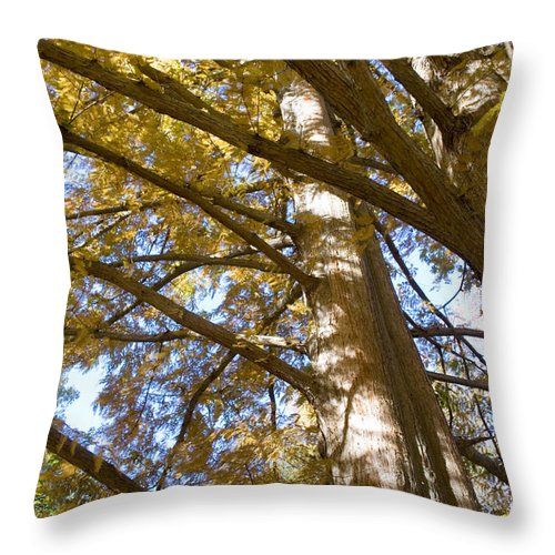 Fall Throw Pillow featuring the photograph Reaching by Breanna Calkins
