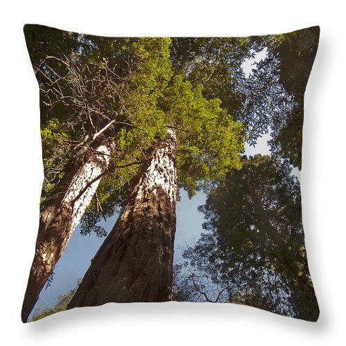 Sequoia Throw Pillow featuring the photograph Reaching For The Heavens by David Kehrli