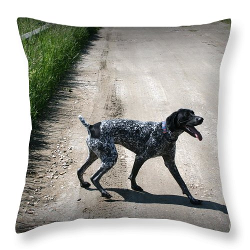 Dog Throw Pillow featuring the photograph Ready For A Walk by Linda Galok