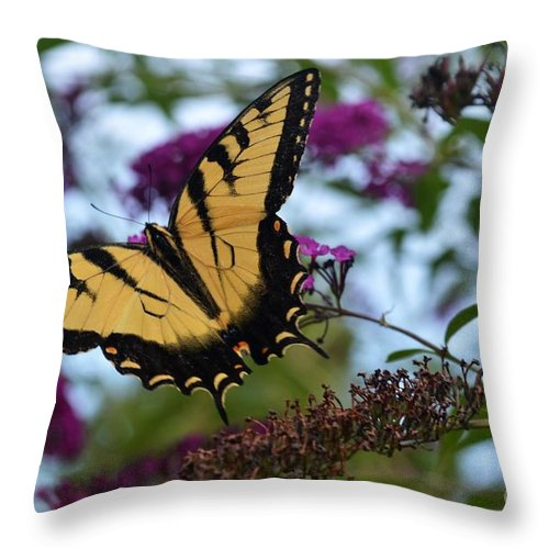 Butterfly Throw Pillow featuring the photograph Ready For Take Off by Judy Wolinsky