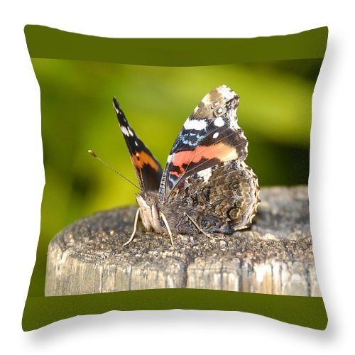 Red Admiral Butterfly Throw Pillow featuring the photograph Red Admiral Butterfly by David Lee Thompson