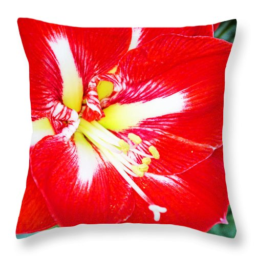 Flowers Throw Pillow featuring the photograph Red Amaryllis by Rich Walter