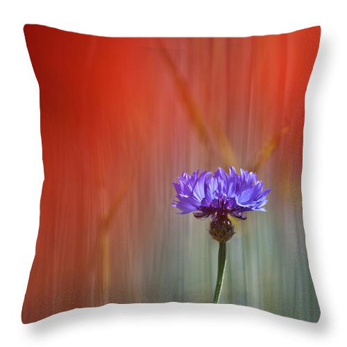 Cornflower Throw Pillow featuring the photograph Red And Blue by Heiko Koehrer-Wagner