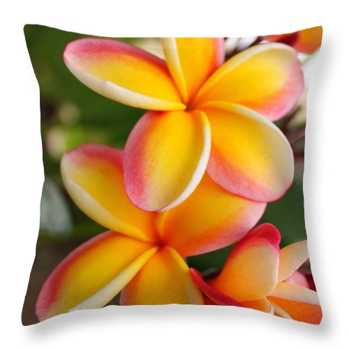 Red Throw Pillow featuring the photograph Plumeria Smoothie by Brian Governale