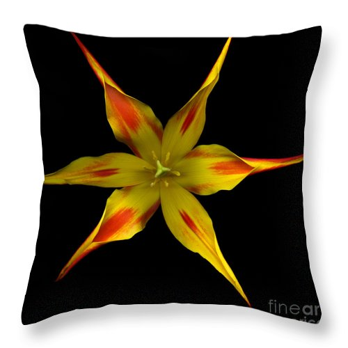 Beauty In Nature Throw Pillow featuring the photograph Red And Yellow Spiked Tulip by Oscar Gutierrez