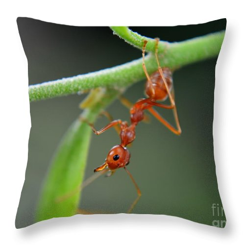 Michelle Meenawong Throw Pillow featuring the photograph Red Ant by Michelle Meenawong