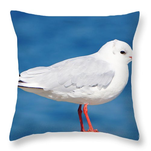 Seagull Throw Pillow featuring the photograph Red-beaked Seagull Resting On The Port by Beverly Claire Kaiya