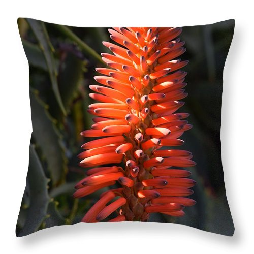 Flower Throw Pillow featuring the photograph Red Beauty by Eric Johansen