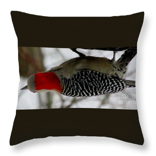 Red Bellied Woodpecker Red Headed Woodpecker Winter Birds Woodpeckers Of North America Red Headed Birds Winter Woodpeckers Winter Wildlife Snow Birds Throw Pillow featuring the photograph Red Bellied Woodpecker by Joshua Bales