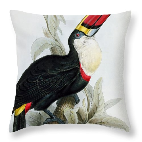 Red Billed Throw Pillow featuring the painting Red-billed Toucan by Edward Lear