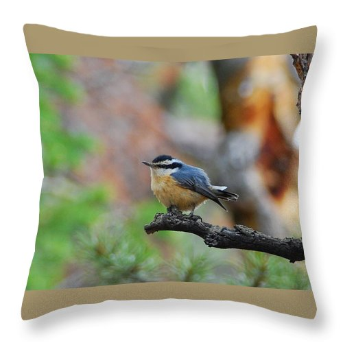 Red-breasted Nuthatch Throw Pillow featuring the photograph Red-breasted Nuthatch by Cascade Colors