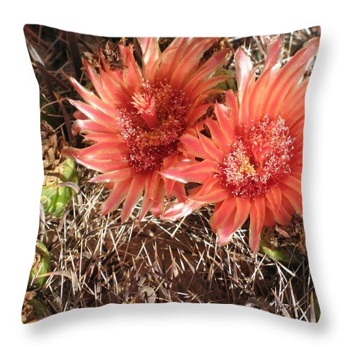 Cactus Throw Pillow featuring the photograph Red Cactus by Christiane Schulze Art And Photography