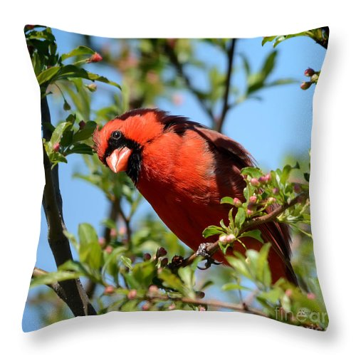 Nature Throw Pillow featuring the photograph Red Cardinal In Springtime by Nava Thompson