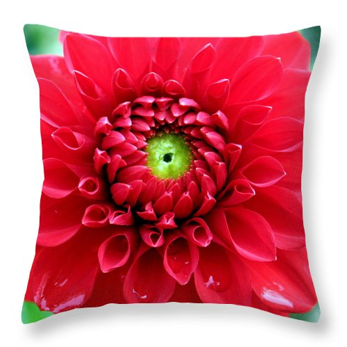 Red Throw Pillow featuring the photograph Red Dahlia by Laurel Talabere