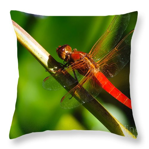 Bug Throw Pillow featuring the photograph Red Dragonfly by Charles Dobbs