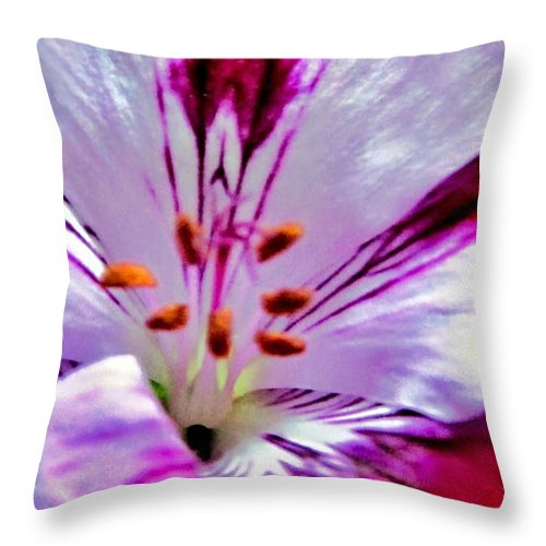 Artiste Danielle Parent Throw Pillow featuring the photograph Red Elegance From Fortinos by Danielle Parent