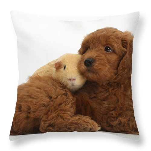 Red F1b Goldendoodle Puppy And Yellow Throw Pillow For Sale By Mark