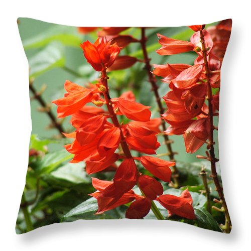 Red Throw Pillow featuring the photograph Red Flower by Nelson Watkins