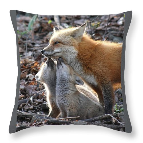 Red Fox Throw Pillow featuring the photograph Red Fox Kits And Parent by Doris Potter
