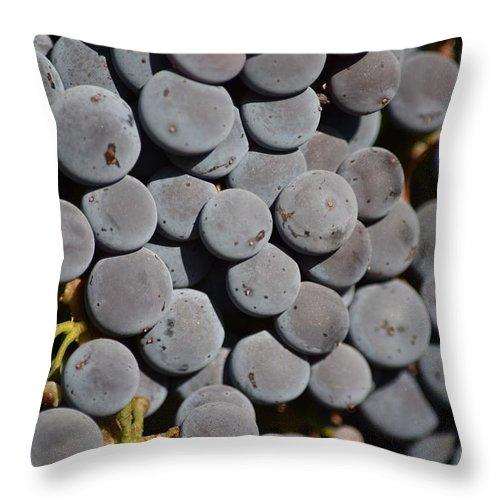 Lorimar Winery Throw Pillow featuring the photograph Red Grapes by Steve Scheunemann