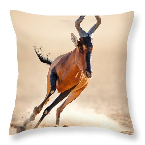 Hartebeest Throw Pillow featuring the photograph Red Hartebeest Running by Johan Swanepoel