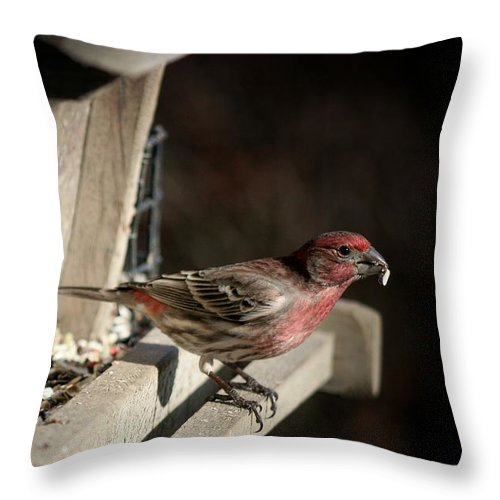 Finch Throw Pillow featuring the photograph Red Head by Susan McMenamin