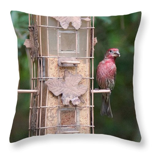 Finch Throw Pillow featuring the photograph Red House Finch by John Black