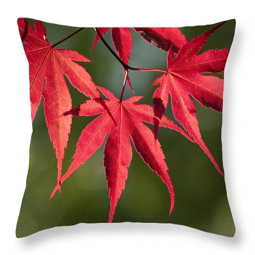 Plant Throw Pillow featuring the photograph Red Japanese Maple Leafs by Chad Davis