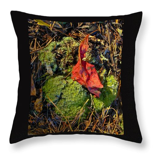 Red Throw Pillow featuring the photograph Red Leaf On Moss by Douglas Barnett