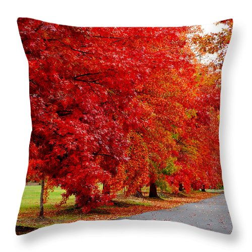 Red Leaf Leaves Fall Colors Road Wet Lined Chico Ca Tree Throw Pillow featuring the photograph Red Leaf Road by Holly Blunkall