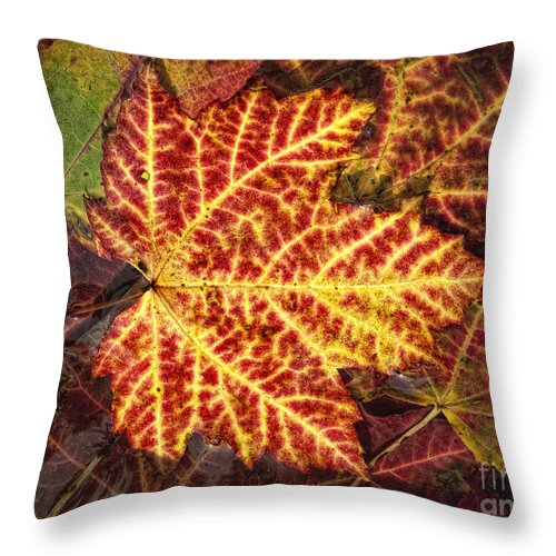Maple Throw Pillow featuring the photograph Red Maple Leaf by Claudia Kuhn