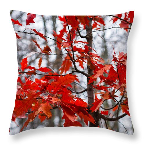 Abstract Throw Pillow featuring the photograph Red Maple Tree by Alexander Senin