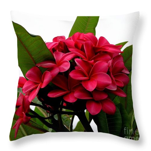 Plumeria Throw Pillow featuring the photograph Red Plumeria by Mary Deal