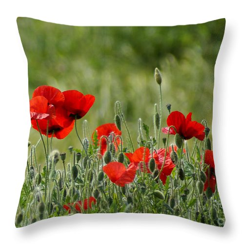 Poppies Throw Pillow featuring the photograph Red Poppies 3 by Carol Lynch
